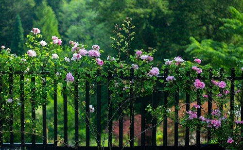 Benefits of Wrought Iron Fence